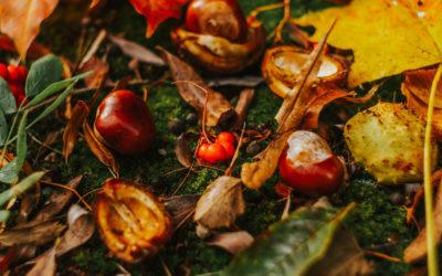 Die Energien des Herbstes