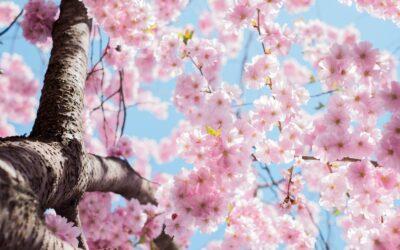 Die Energien des Frühlings